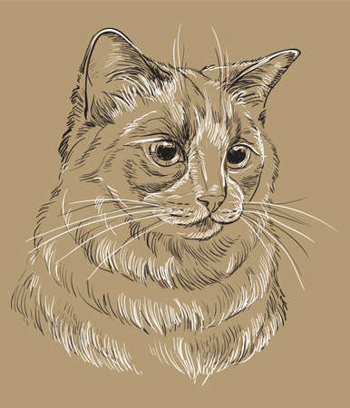 Vector hand drawing portrait of ragdoll cat in black and white colors. Monochrome realistic retro portrait of cat. Vector vintage illustration isolated on beige background.Image good for design, cards and tattoo.  Çizim