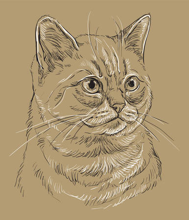 Vector hand drawing portrait of British cat in black and white colors isolated on beige background. Monochrome realistic portrait of cat. Vector illustration of fluffy cat. Image for design, cards.