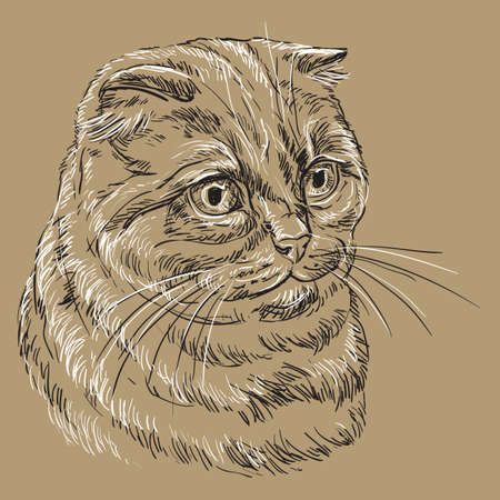 Vector hand drawing portrait of scottish fold cat in black and white colors isolated on beige background. Monochrome realistic portrait of scottish cat. Vector illustration of fluffy cat. Image for design, cards.