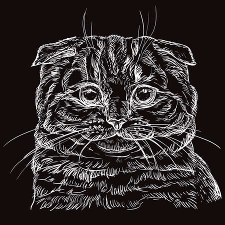 Vector hand drawing portrait of scottish fold cat in white color isolated on black background. Monochrome realistic portrait of cat. Vector illustration of scottish fold. Image for design, cards.