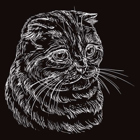 Vector hand drawing portrait of scottish fold cat in white color isolated on black background. Monochrome realistic portrait of scottish cat. Vector illustration of fluffy cat. Image for design, cards. Ilustración de vector