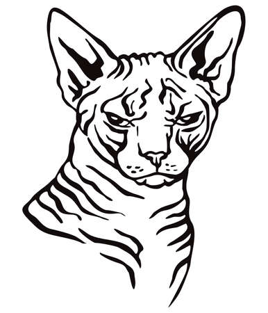 Colorful decorative portrait of angry sphinx cat, contour vector illustration in black color isolated on white background. Image for design and tattoo.