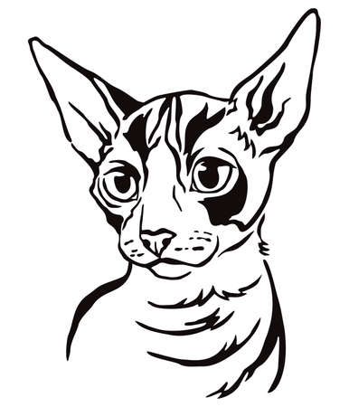 Decorative portrait of Cornish Rex cat, contour vector illustration in black color isolated on white background. Image for design and tattoo.