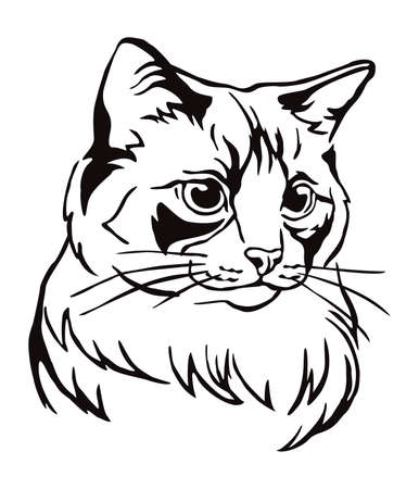 Decorative portrait of Ragdoll cat, contour vector illustration in black color isolated on white background. Image for design, cards and tattoo.   イラスト・ベクター素材
