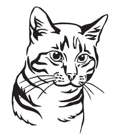 Decorative portrait of mongrel Cat, contour vector illustration in black color isolated on white background. Image for design, cards and tattoo.   イラスト・ベクター素材