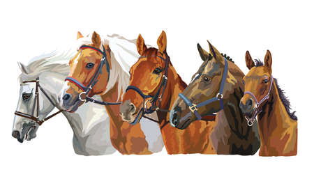 Set of colorful vector realistic portraits of horses breeds looking in profile. Group of horses in bridle isolated on white background. Vector colorful portraits of horses. Illustration