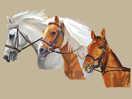 Colorful vector realistic portraits of three horses looking in profile. Group of horses in bridle isolated on beige background. Vector colorful portraits of horses.