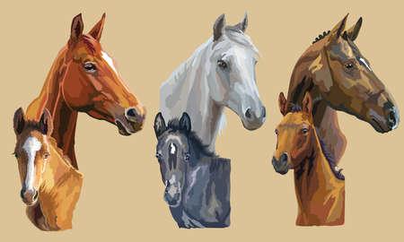 Ensemble de portraits réalistes vectoriels colorés de juments et de poulains regardant de profil. Groupe de chevaux isolé sur fond beige. Portraits colorés de vecteur de chevaux.
