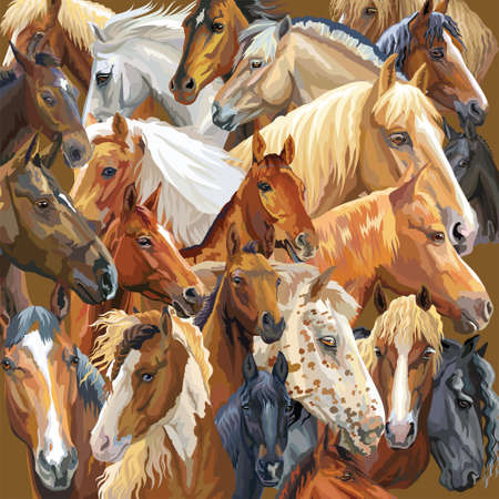 Colorful vector pattern with realistic portraits of horses breeds. Vector colorful background with portraits of horses. Illustration is good for postcards, design and posters.