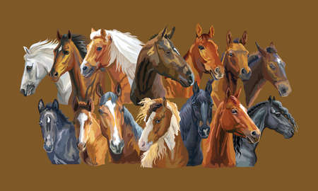 Set of colorful vector realistic portraits of horses breeds. Big group of horses isolated on brown background. Vector colorful portraits of horses. Illustration is good for postcards, design and posters.
