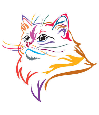 Colorful decorative portrait of Ragdoll cat, contour vector illustration in different colors isolated on white background. Image for design and tattoo.   イラスト・ベクター素材