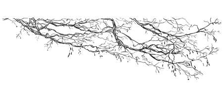 Vector hand drawing branch of tree in black color isolated on white background. Monochrome realistic  branch of tree in springtime. Image for design, cards. 矢量图像