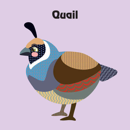 Colorful decorative outline cute quail bird sitting in profile. Wild animals and birds vector cartoon characters flat illustration in different colors isolated on purple background.Vector stock illustration.