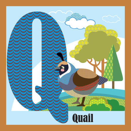 Vector cartoon flashcards of animal alphabet, letter Q. Colorful cartoon illustration of letter Q and quail vector character. Bright colors zoo wildlife illustration. Cute flat cartoon style. Stock illustration.