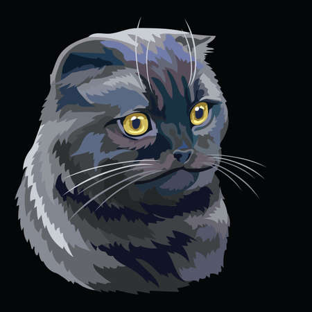 Colorful vector drawing portrait of scottish fold cat isolated on black background. Colorful realistic portrait of scottish cat. Vector illustration of fluffy cat for design, cards. Stock illustration