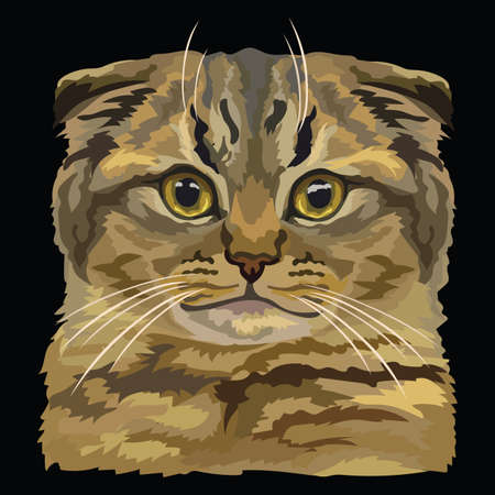 Colorful vector drawing portrait of scottish fold cat isolated on black background. Colorful realistic portrait of cat. Vector illustration of fluffy cat. Image for design, cards. Stock illustration.