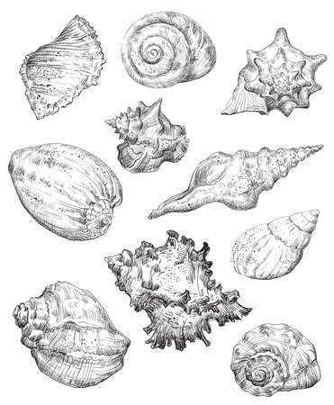 Hand drawing sketch set of seashells. Vector monochrome illustration of seashells collection in black color isolated on white background. Design travel elements, vintage icons set. Stock illustration for art and design.