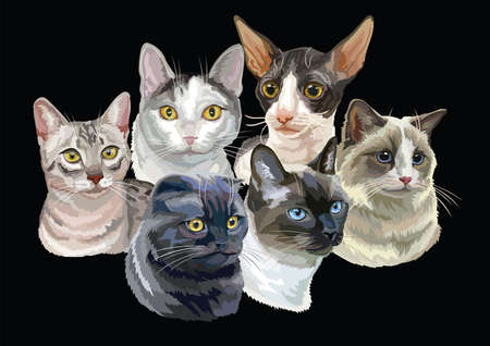 Vector illustration with cats breeds portraits isolated on black background. Cats vector retro horizontal illustration in realistic style. Image for design and cards. Stock illustration  Illustration