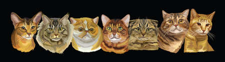 Vector illustration with isolated different cats breeds portraits on black background. Cats vector retro horizontal illustration in realistic style. Image for design and cards. Stock illustration Ilustración de vector