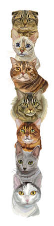 Vector vertical illustration with different cats breeds portraits isolated on white background. Cats vector vintage illustration in realistic style.Image for design, cards and tattoo. Stock illustration Illustration