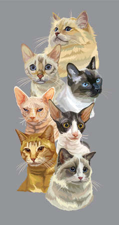 Vector vertical poster with different cats breeds portraits isolated on grey background. Cats vector vintage illustration in realistic style.Image for design, cards and tattoo. Stock illustration