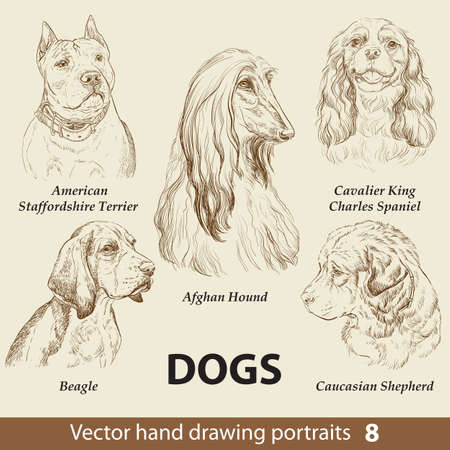 Hand drawing set of a cute dogs breeds. Dogs head isolated on beige background. Pencil hand drawn realistic portrait. Animal collection. Good for print T-shirt, banner. Stock illustration Ilustração