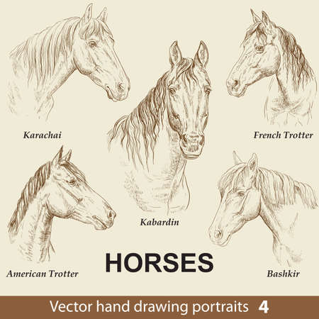 Hand drawing set of horses breeds. Elegance horse head isolated on beige background. Pencil, ink hand drawn realistic portrait. Animal collection. Good for print T-shirt, banner. Stock illustration Vectores