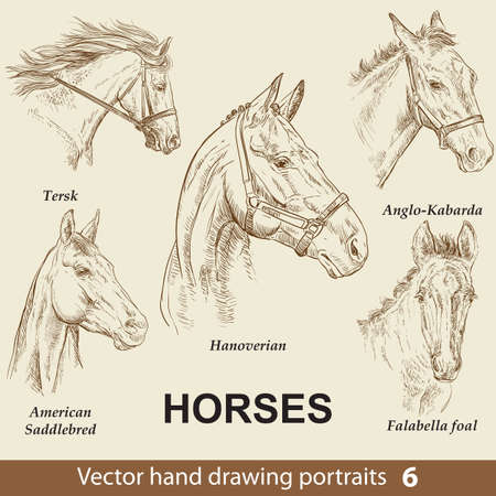 Hand drawing set of horses breeds. Elegance horse head isolated on beige background. Pencil, ink hand drawn realistic portrait. Animal collection. Good for print T-shirt, banner. Stock illustration Illusztráció