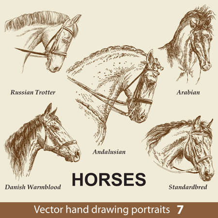 Hand drawing set of horses breeds. Elegance horse head isolated on beige background. Pencil, ink hand drawn realistic portrait. Animal collection. Good for print T-shirt, banner. Stock illustration Illustration