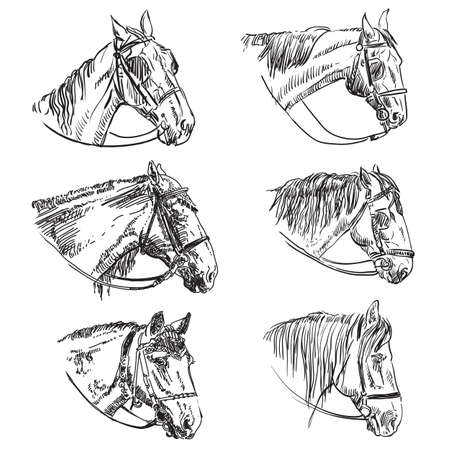 Hand drawing set of  6 horses heads in bridle. Elegance horses heads in profile view isolated on white background. Pencil, ink hand drawn realistic portrait. Animal collection. Good for print, banner