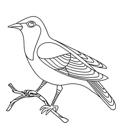Vector line art monochrome song bird nightingale sitting on branch. Black contour illustration isolated on white background. Stock illustration for coloring book, design, print, t-shirt, home decor. Çizim
