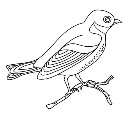 Vector line art monochrome song bird nightingale sitting on branch. Black contour illustration isolated on white background. Stock illustration for coloring book, design, print, t-shirt, home decor. 向量圖像