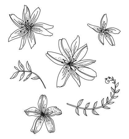 Floral botanical set with hand drawn line art lily flowers. Vector monochrome floral template illustration for wedding invitation, vegan cafe, flower shop logo, print, design, tattoo.