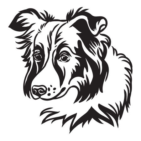Decorative outline portrait of cute border collie dog vector illustration in black color isolated on white background. Isolated image for design and tattoo. Archivio Fotografico - 154835501