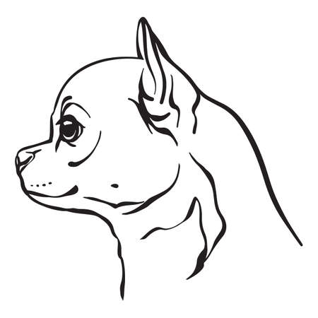 Decorative outline portrait of cute Chihuahua dog vector illustration in black color isolated on white background. Isolated image for design and tattoo. Archivio Fotografico - 154835525