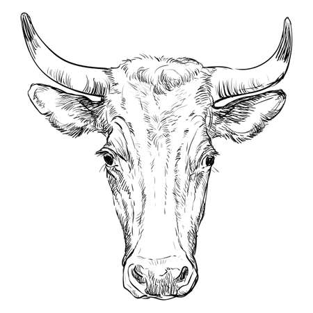 Monochrome cow head sketch hand drawn vector illustration isolated on white background. Vintage illustration of horned bull front view for label, poster, print and design. Archivio Fotografico - 154835605