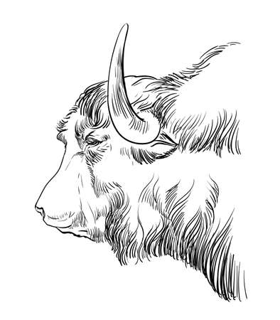 Monochrome cow head sketch hand drawn vector illustration isolated on white background. Vintage illustration of Tibetan Yak for label, poster, print and design. Archivio Fotografico - 154835608