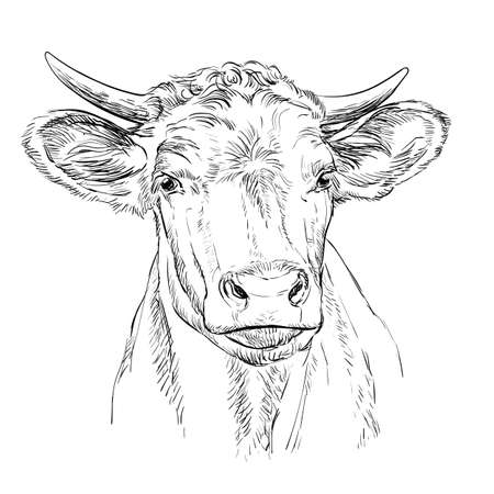 Monochrome cute cow head sketch hand drawn vector illustration isolated on white background. Vintage illustration for label, poster, print and design. Archivio Fotografico - 154835635