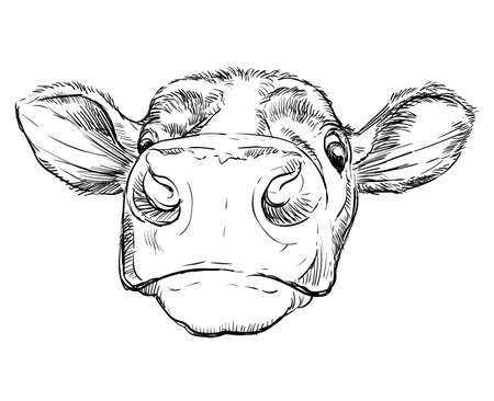Monochrome funny cow head sketch hand drawn vector illustration isolated on white background. Vintage illustration of bull for poster, print, t shirt and design. Archivio Fotografico - 154835682