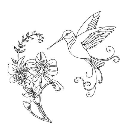 Vector line art colibri bird and decorative flowers. Contour illustration isolated on white. Vector hand drawn monochrome template for coloring book, wedding invitation, design, print, t shirt, home decor. Archivio Fotografico - 154773025