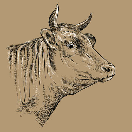 Head of cow hand drawing illustration Vettoriali