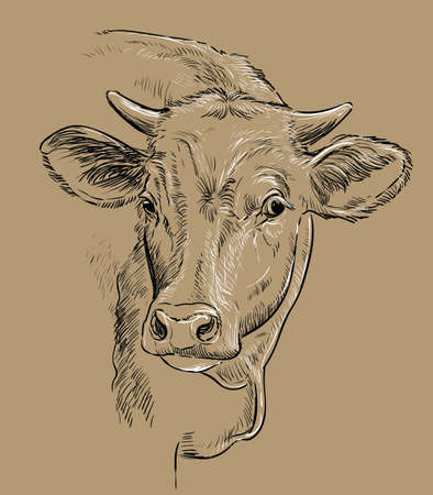 Head of  cow drawing illustration Vettoriali