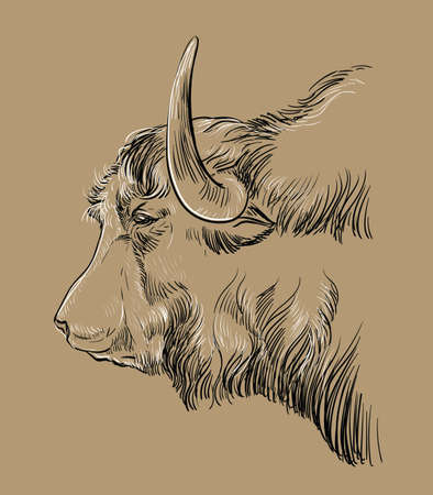 Head of yak hand drawing illustration Vettoriali