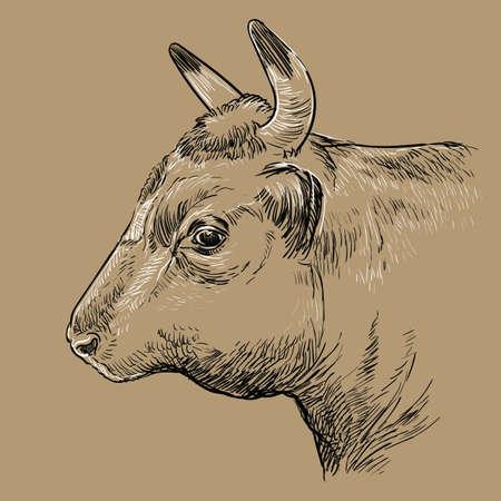 Head of bull hand drawing illustration