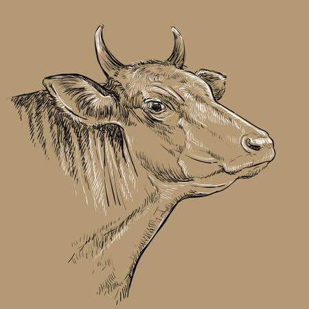 Cow head. Hand drawn sketch in a graphic style on brown background. Vettoriali