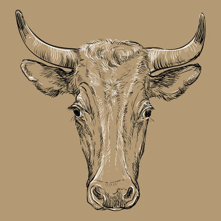 Cow head   illustration isolated on brown background.