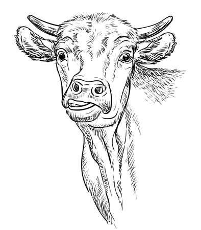 Head of funny bull illustration Vettoriali