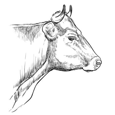Head of thoughtful bull hand drawing illustration Vettoriali