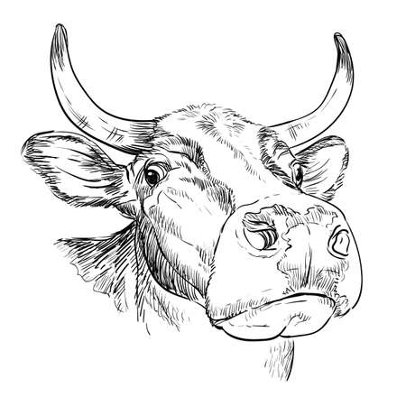 Head of funny bull in perspective drawing illustration