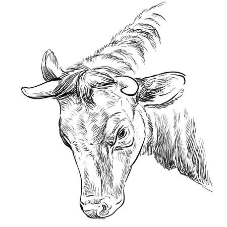 Head of butting bull hand drawing illustration Vetores